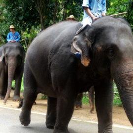 Dschungel, Berge, Elefanten reiten – der Norden Thailands