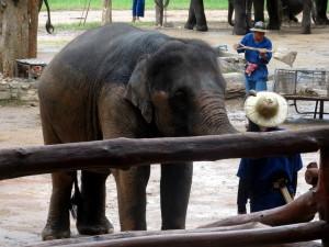 vier bilder ein wort elefant